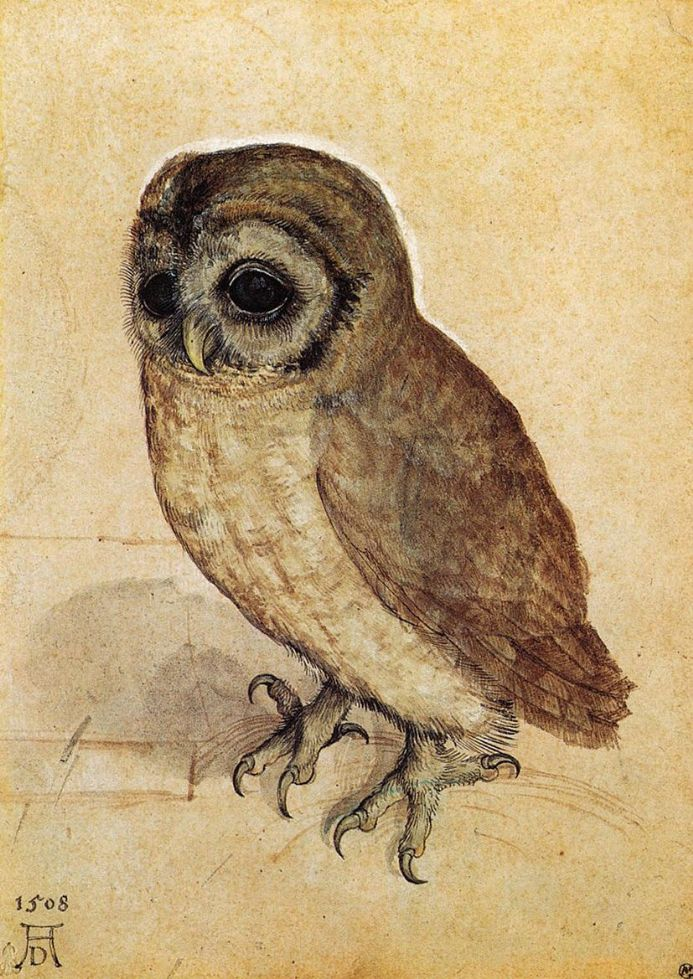Durer, Albrecht: The Little Owl. Fine Art Print/Poster. Sizes: A4/A3/A2/A1 (00158)